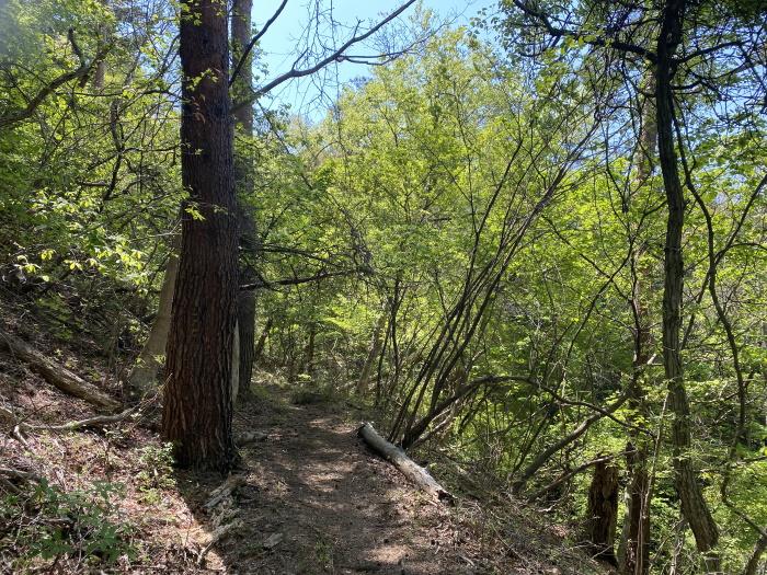 九鬼山の登山道で見える木