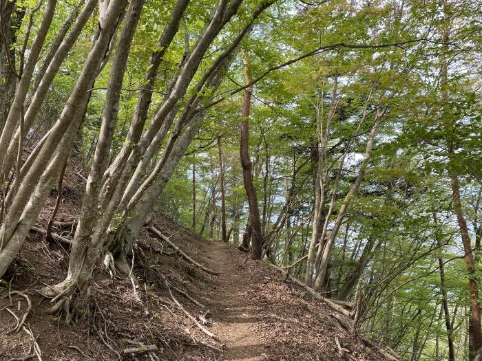 九鬼山登山道